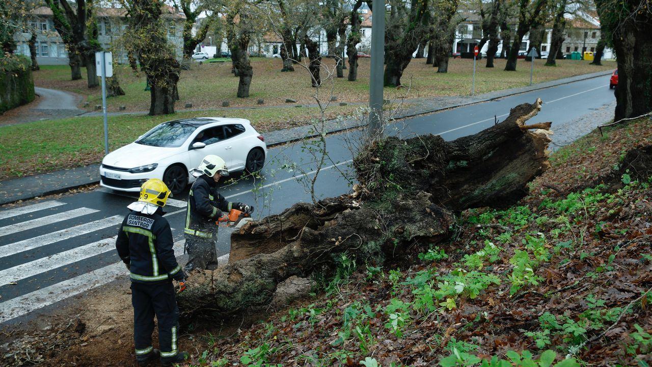 Los Bomberos de Santiago retiran un árbol que cayó en San Lourenzo