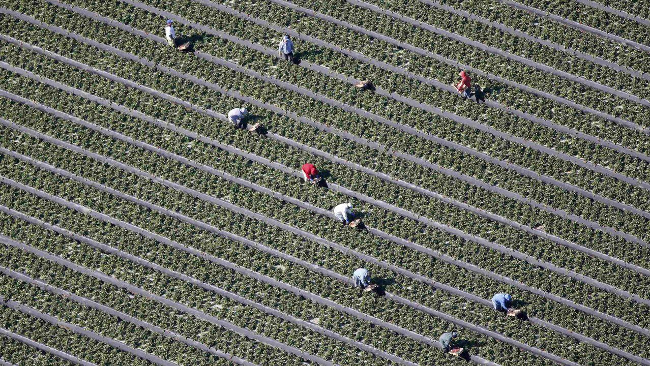 Fran Sol Real Oviedo Horizontal.Vista aérea de un campo en Florida
