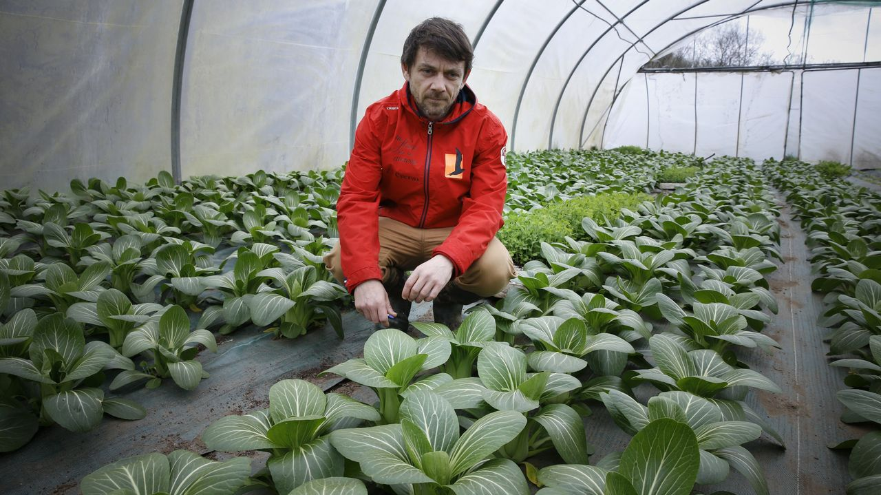 Para alta cocina. En Teo, Santiago Pérez cultiva espinaca asiática o chícharo lágrima para restaurantes de toda Europa.
