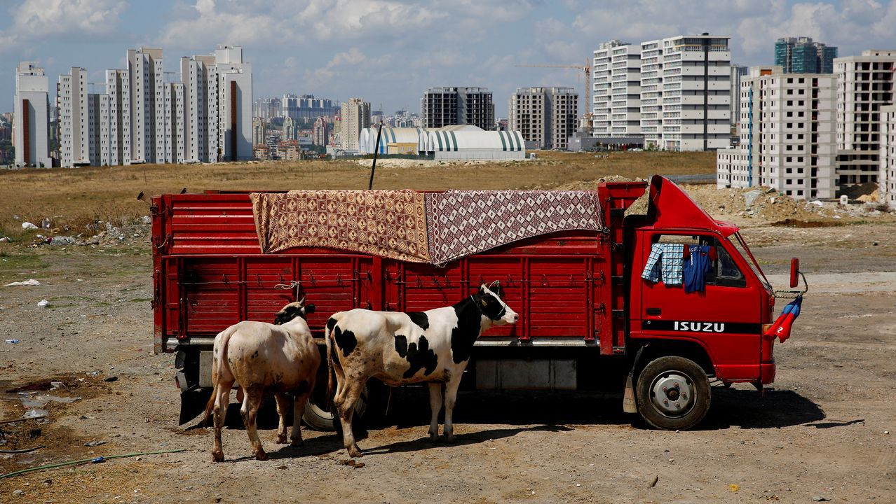Un granjero traslada a su ganado al mercado en un camión en Turquía.