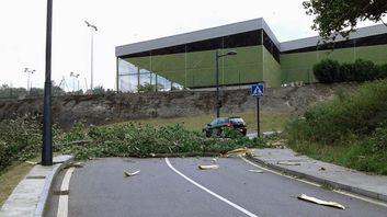 El viento tumba un árbol y corta la carretera de Olivares (Oviedo)