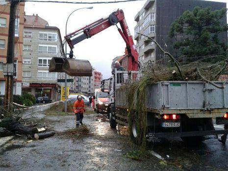 Los operarios retiran un árbol caído en Doctor Tourón