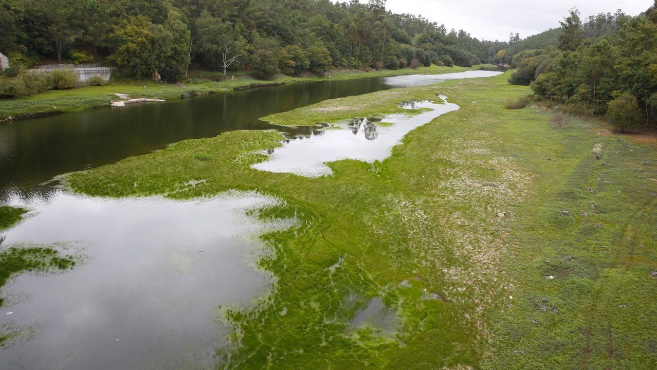 ¿Por qué el agua de este embalse se tiñe de verde?.