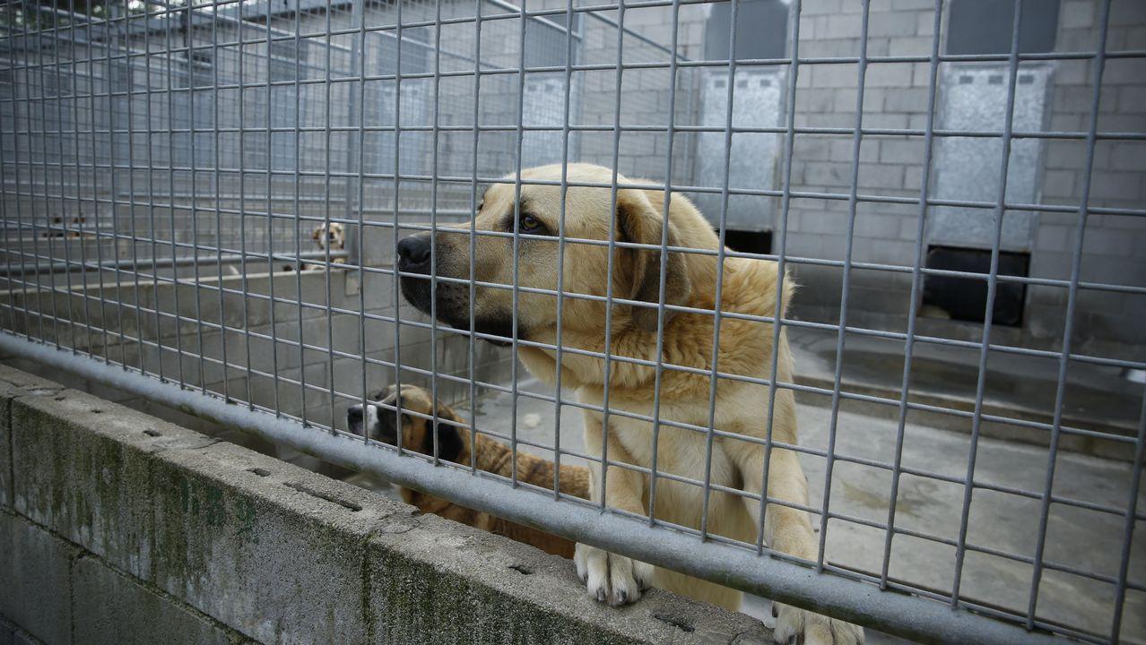 Buscan familias para las mascotas de Bando.Zona del botellón