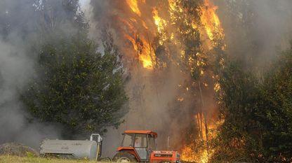 Os incendios de copa son os que máis rapidamente se extenden dunhas árbores a outras