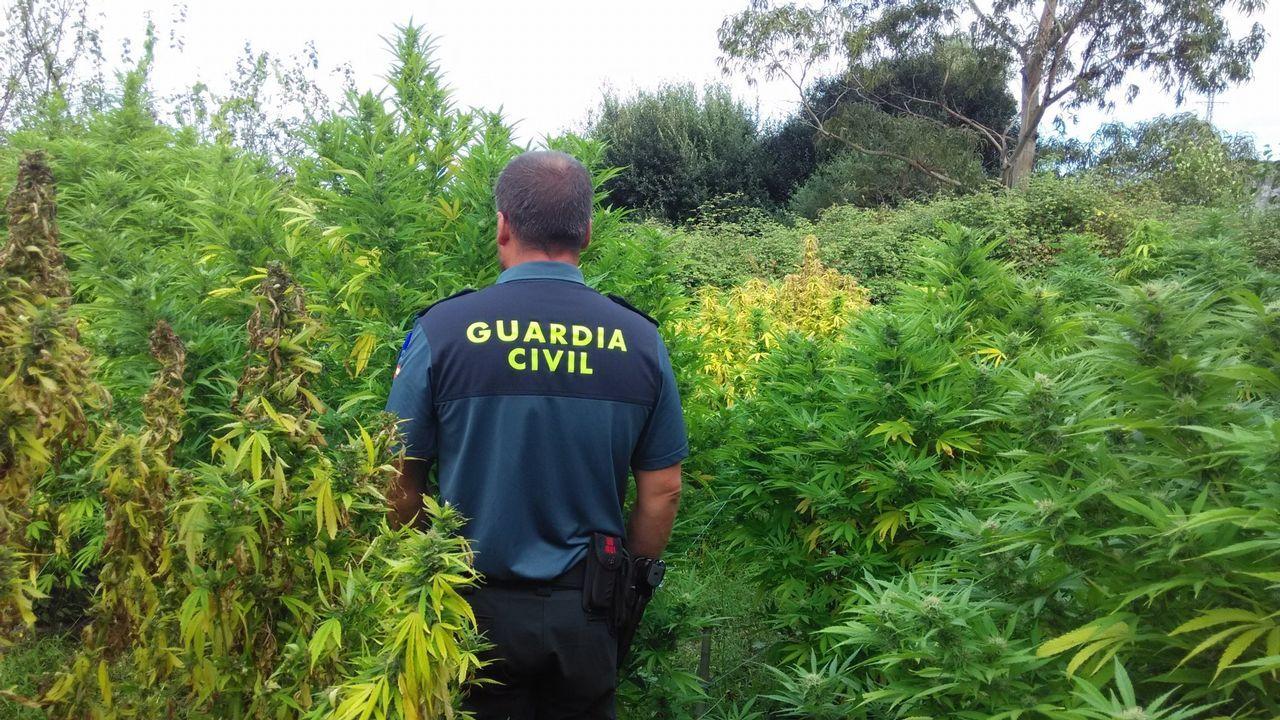 una-pizza-conduce-a-la-policía-a-otro-cultivo-de-marihuana-en-la-zapateira