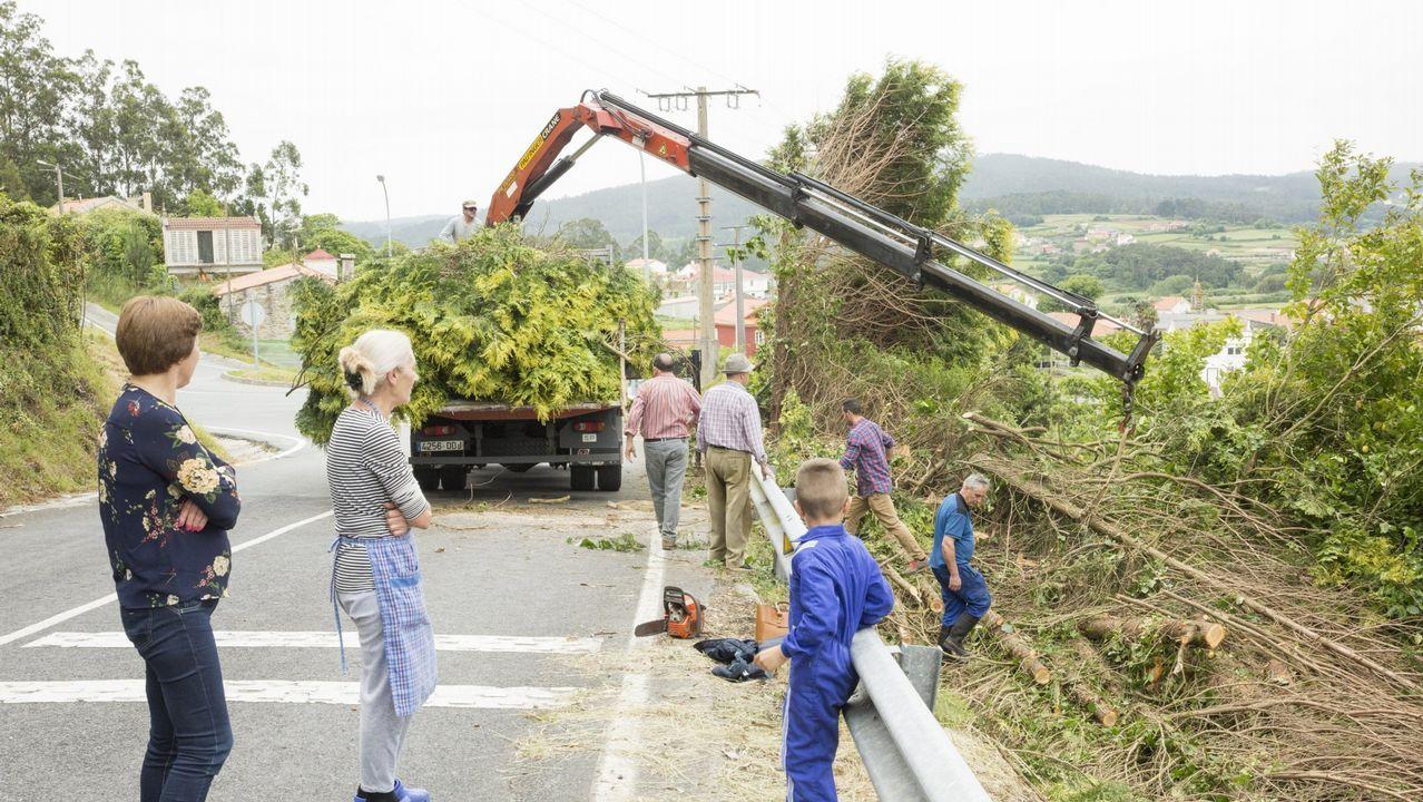 .Tala de árboles en la carretera de Ponteceso a Corme