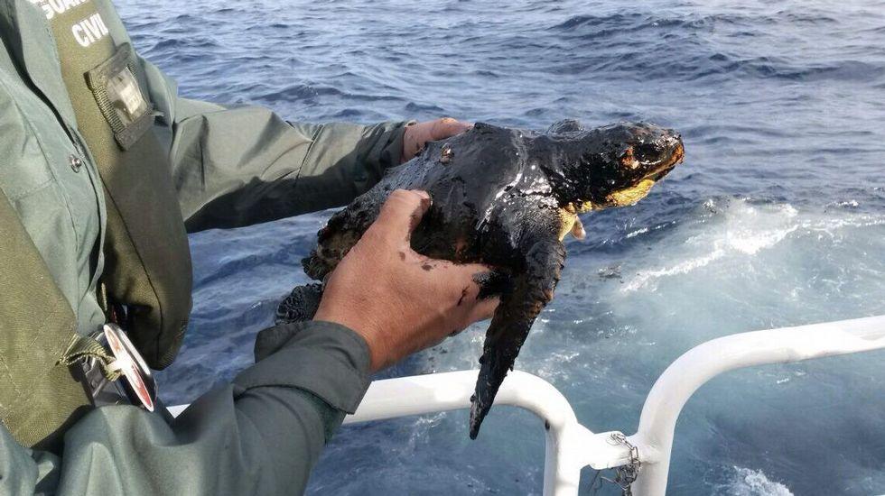 El vertido ya es visible desde el aire aunque el parecer se aleja de las Islas Canarias.Fotografía facilitada por Greenpeace del vertido de fuel del pesquero ruso Oleg Naydenov, localizado a 2.700 metros de profundidad y a 15 millas (24 kilómetros) del sur de Gran Canaria