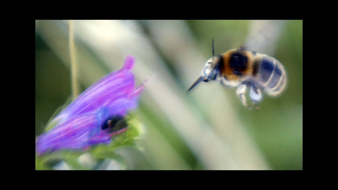 Las arpas sin música que salvan la vida a las abejas de Campañó