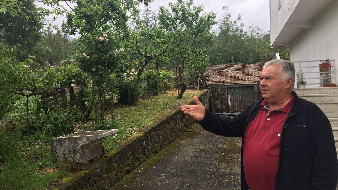 Plantación de shiitake en la Ribeira Sacra