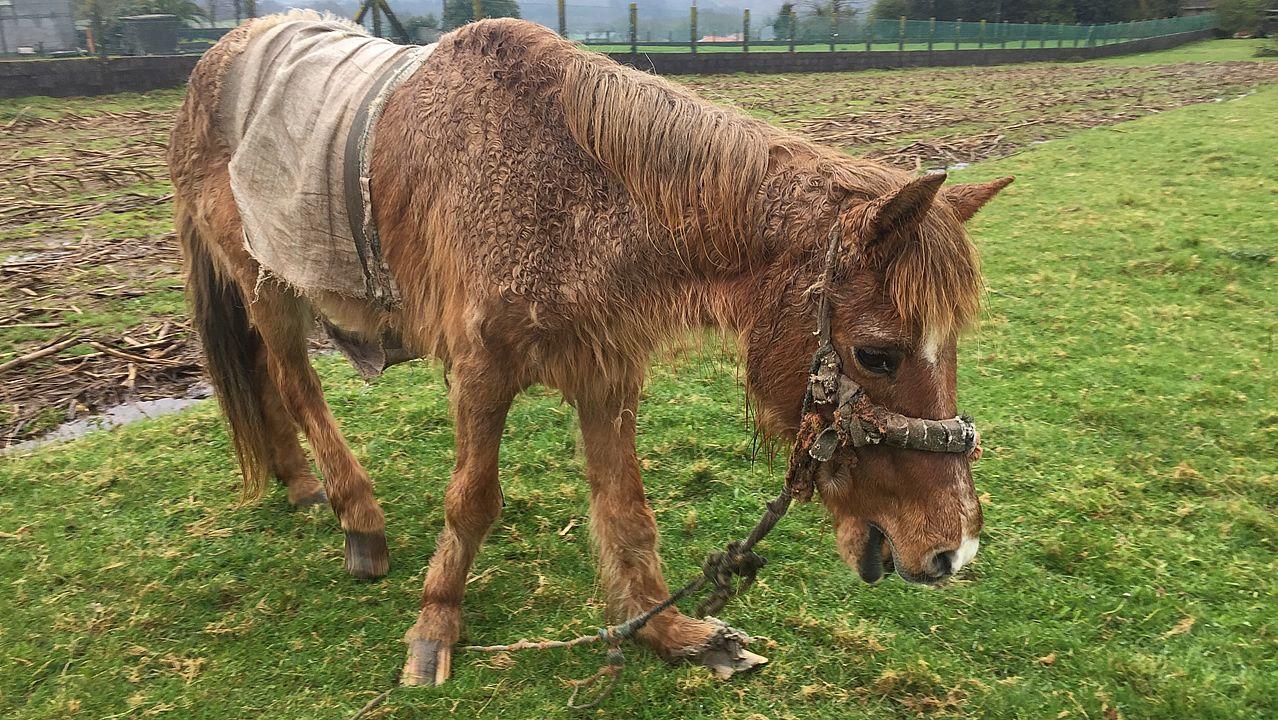 Una yegua se muere de hambre y frío en Santiago.
