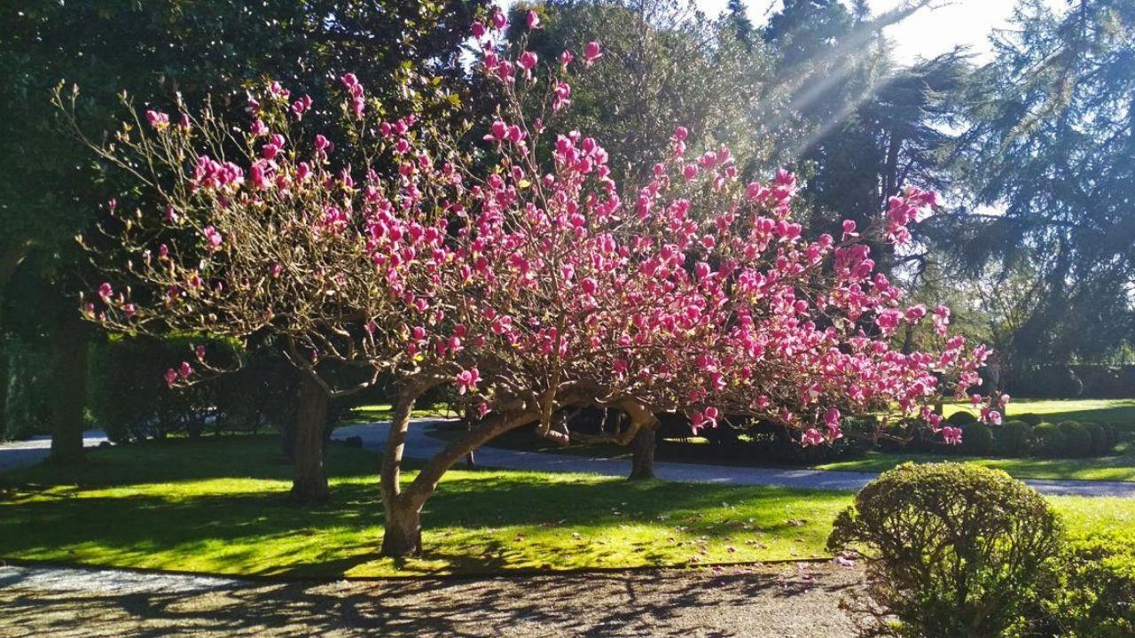 Acto de Pablo Iglesias en Gijón.Magnolia del jardín del museo Evaristo Valle