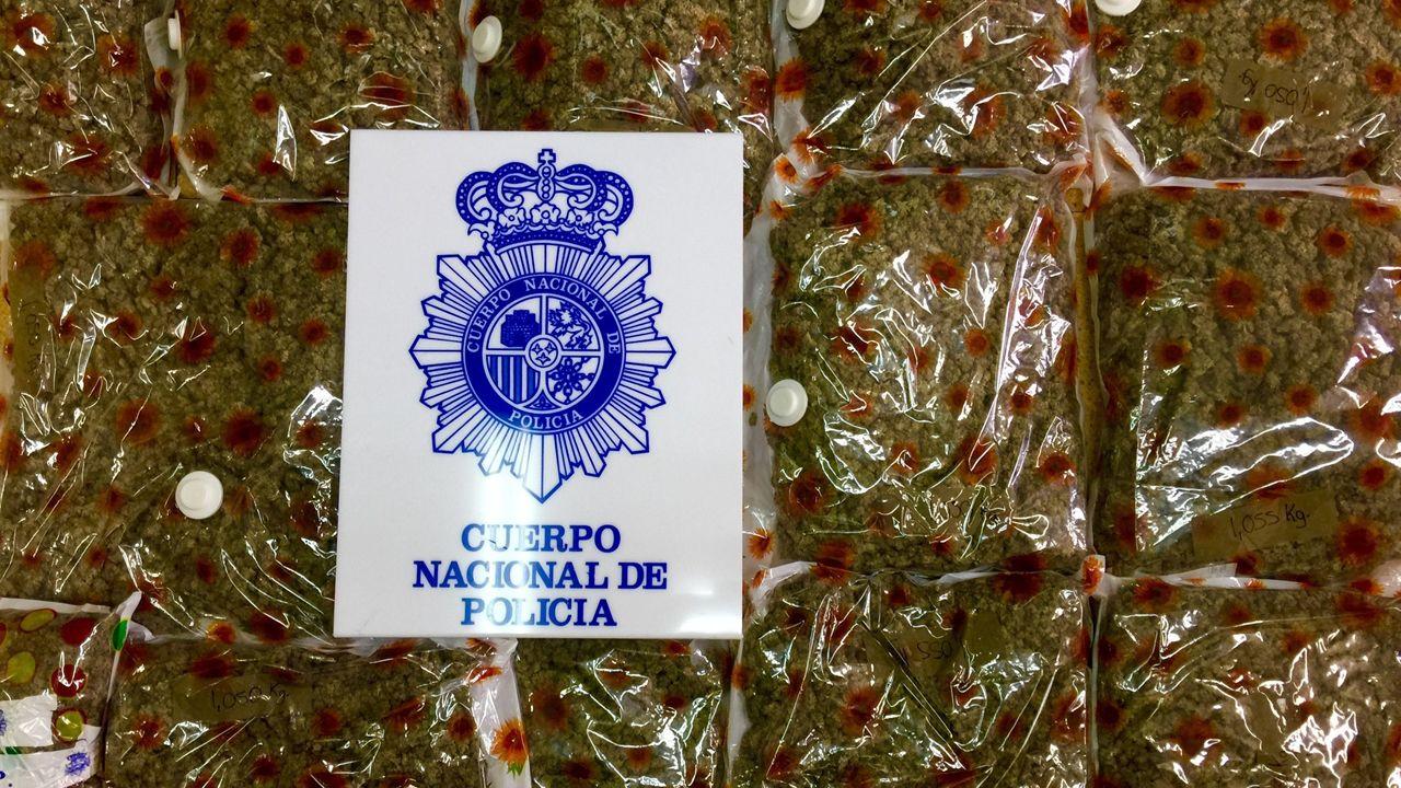 Marihuana confiscada por la Policía en una finca en las afueras de Lugones