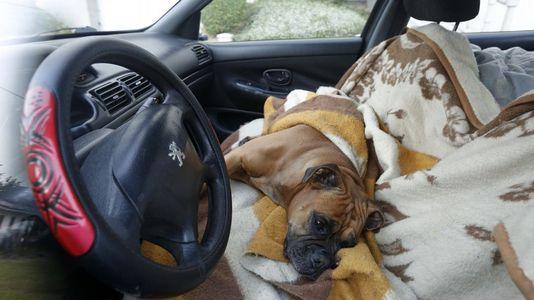 Una perra encerrada en un coche aparcado