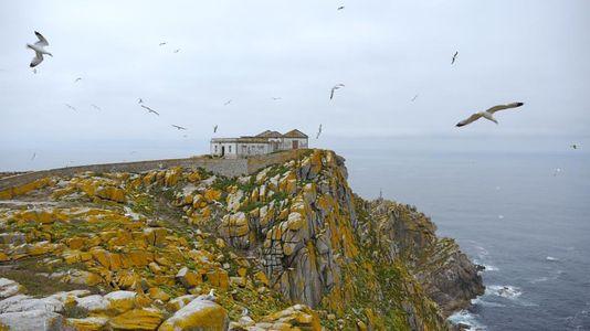 Sisargas, o último refuxio das aves mariñas