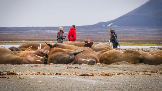 Unha olladaao Ártico