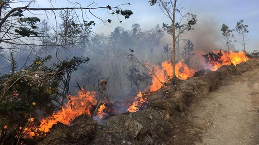 Incendio forestal en Ribadeo