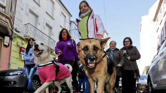 Marcha canina en contra del maltrato animal por las calles de Lugo Perros, protectora
