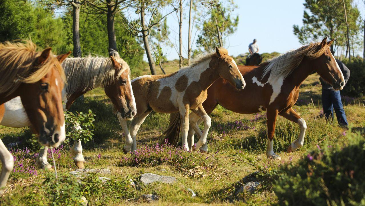 La asociación Monte Faro logra salvar la única cabaña equina libre de la comarca.