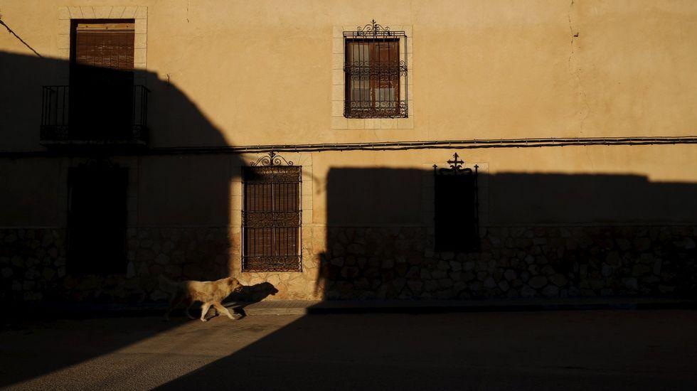 .EL TOBOSO.  Un perro vagabundea por las calles vacías del pueblo del que era oriunda Dulcinea, la amada de don Quijote, El Toboso (Toledo), un típico ejemplo manchego de este declive rural que indaga Sergio del Molino -retratado en la fotografía inferior- en su ensayo «La España vacía».