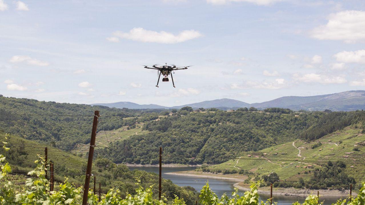 Un dron volando sobre un viñedo en Galicia