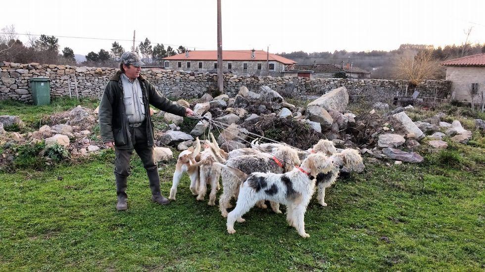 Gerardo González, cazador de Sober, con perros de raza grifón vendeano