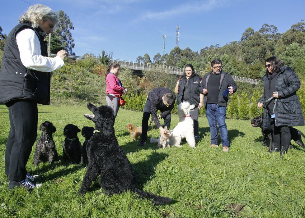 El grupo de amigos humanos y caninos, durante una de las clases