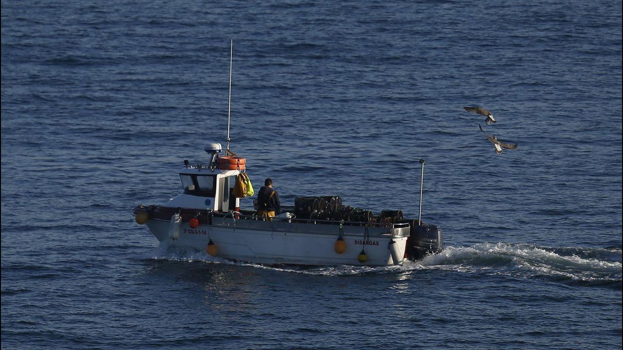 ¿Por qué es importante criar pulpos en cautividad?.Barco de pesca de bajura
