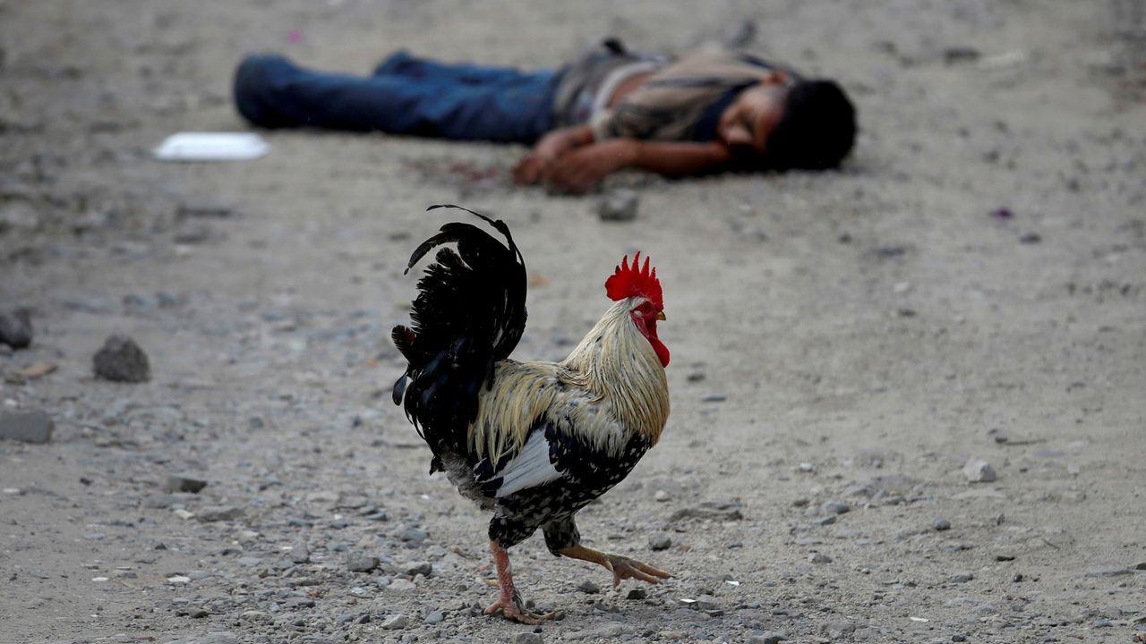 El perfil de Ignacio Cuesta.Un gallo pasa junto al cadáver de un pandillero del Barrio 18 en San Pedro Sula