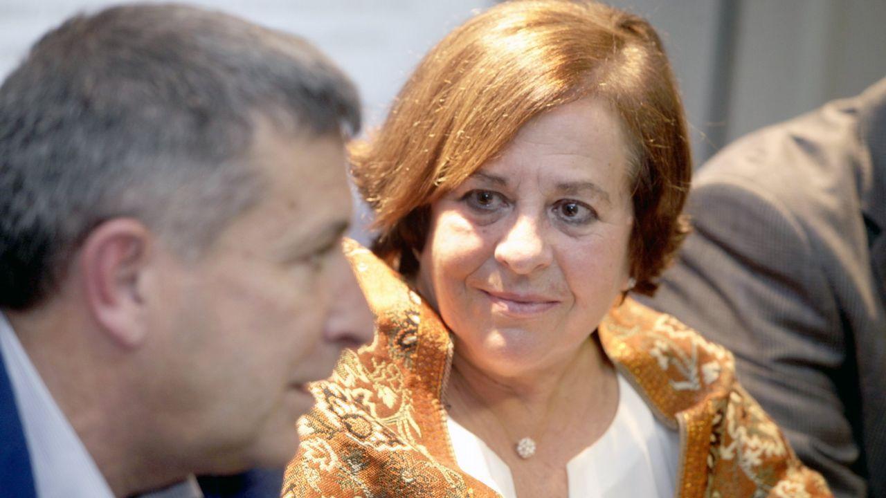 Mostra internacional de la camelia en Vilagarcía