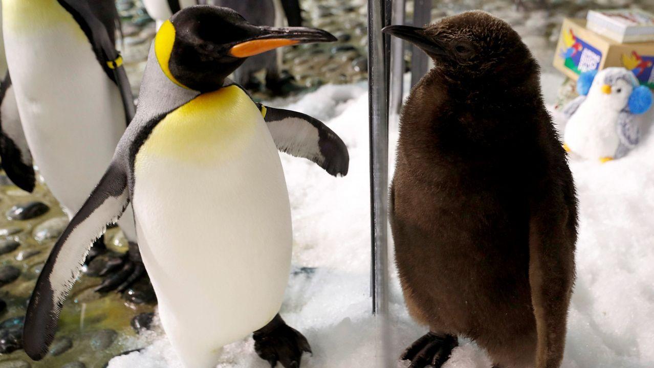 Dos pingüinos en Singapur