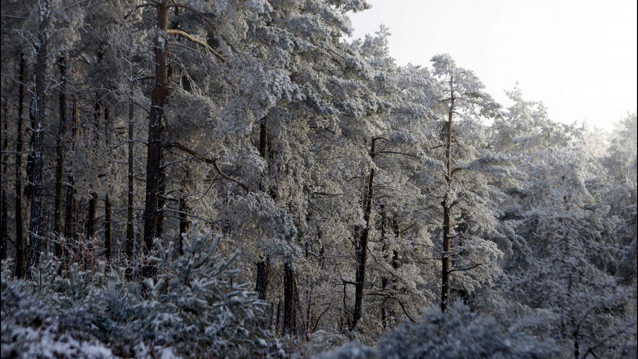 Árboles nevados en la sierra de O Faro, en Chantada