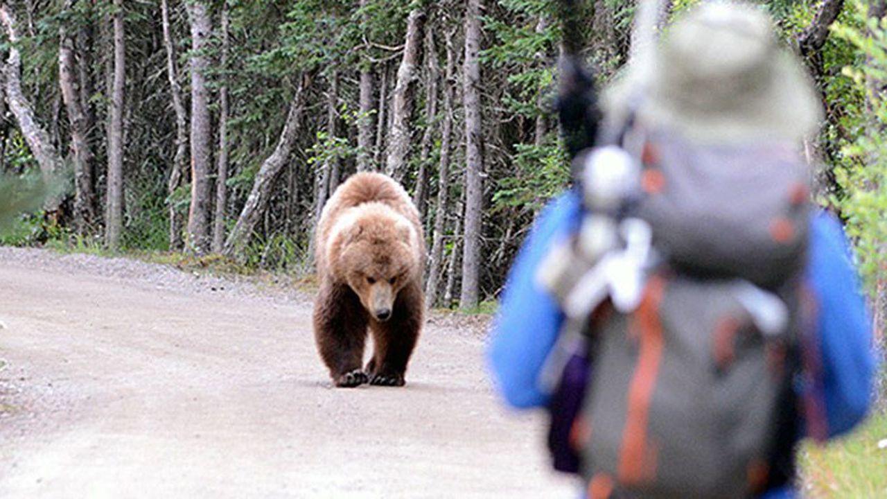 selectividad, pau.Encuentro de una persona con un oso en un parque natural de Estados Unidos