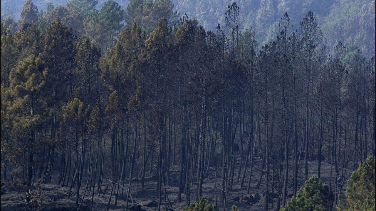 Los drones, en la lucha contra los incendios.Imagen de archivo de un contendor quemado en Vigo