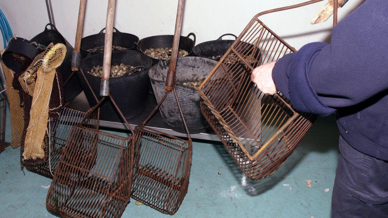 .Marisco confiscadoa furtivos por los vigilantes de la cofradía de A Illa de Arousa