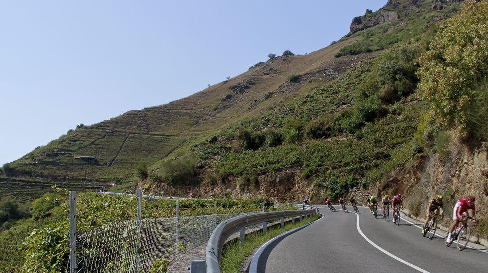 La serpiente multicolor atravesó los -dañados- viñedos de la ribeira de Doade, en Sober, antes de abandonar la provincia de Lugo