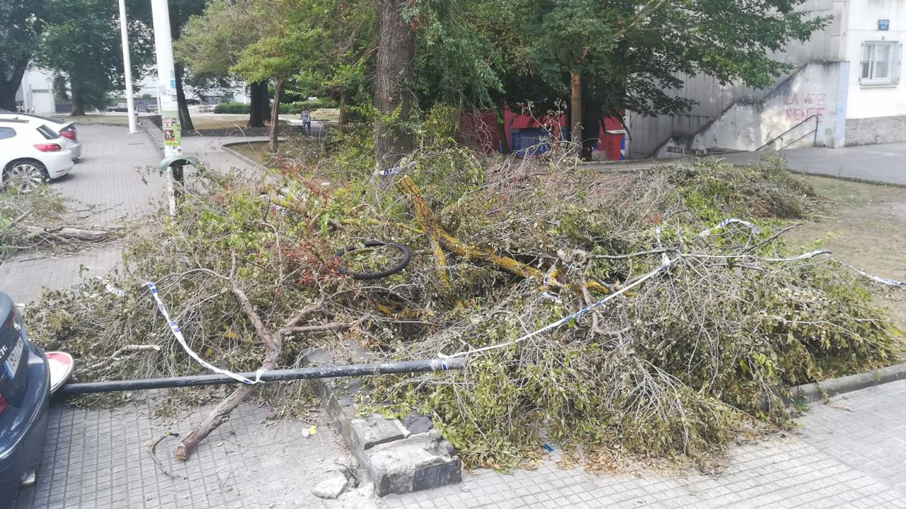 ramas caídas en el BArrio de las Flores