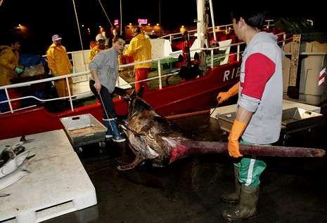 Chile exige evaluar antes la población de pez espada (en la foto, descarga en Vigo).