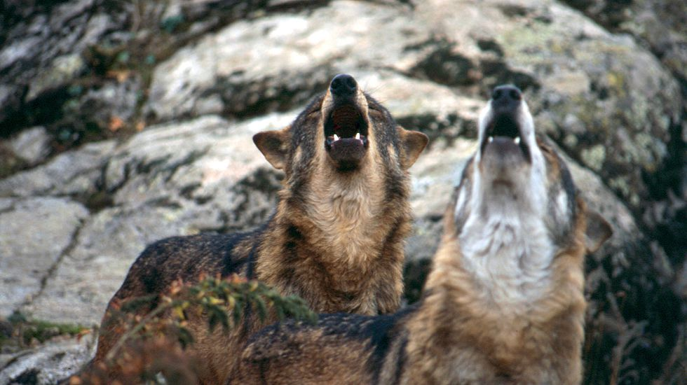 Lobos grande.Participantes en las jornadas reunidos en la Estación Científica do Courel