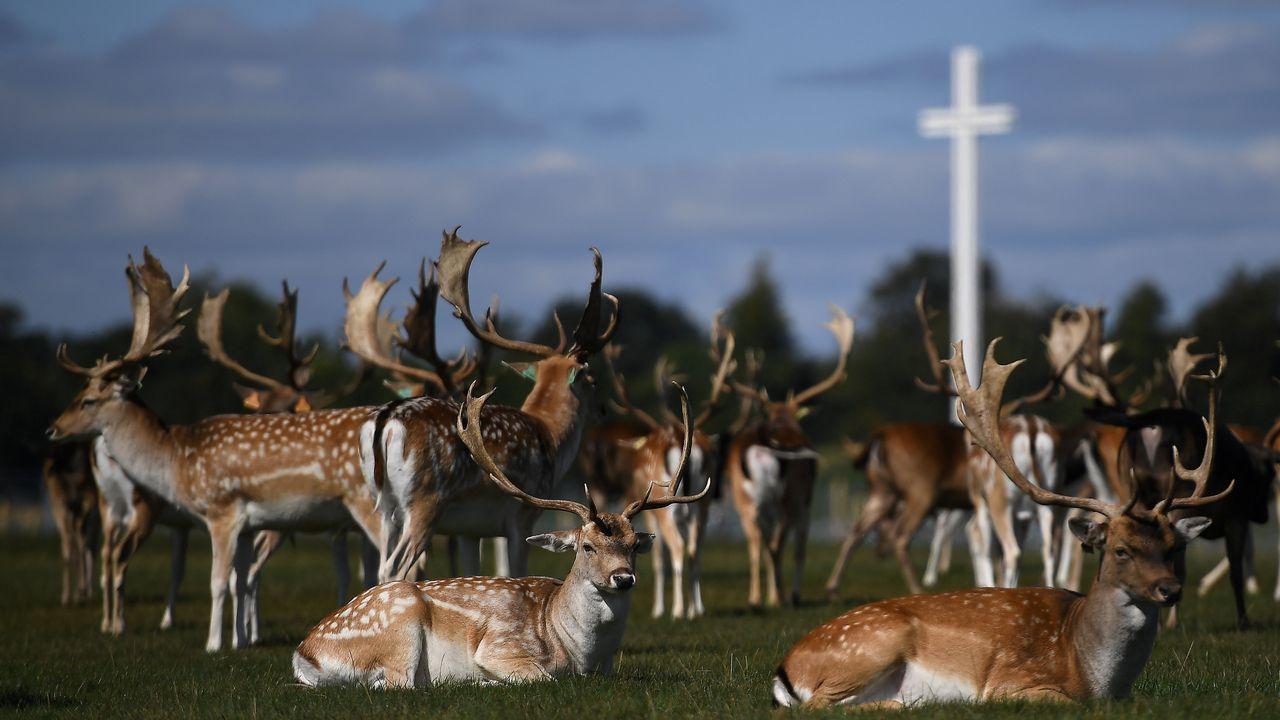 Un grupo de ciervos descansan en el Parque Phoenix, en Dublín, Irlanda