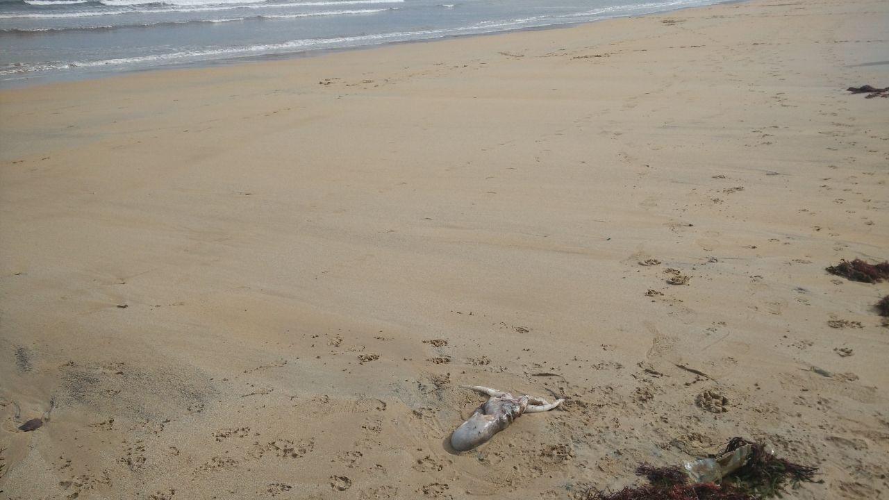 En primer término, restos de lo que podría ser un pulpo, en la playa de San Lorenzo