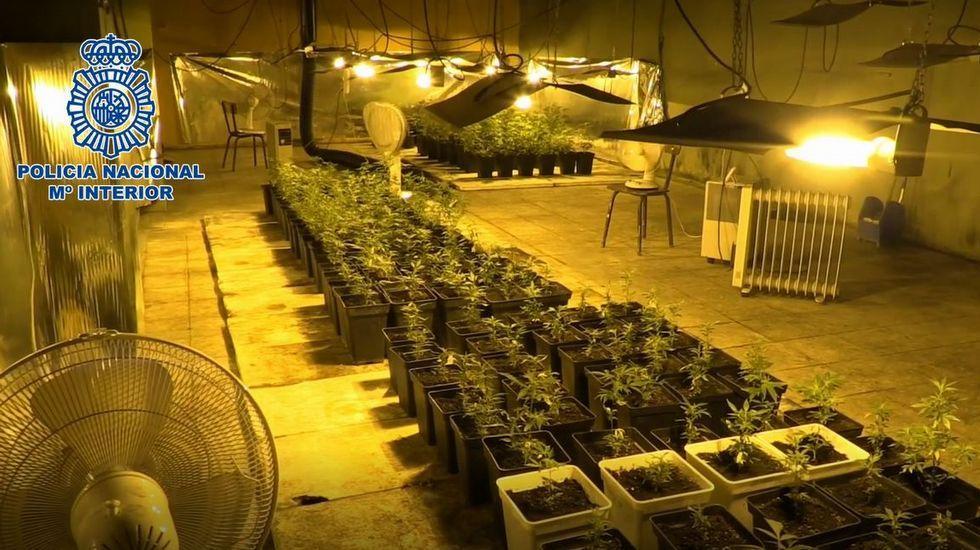 Desarticulado un grupo de narcotraficantes e incautadas 3.500 plantas de marihuana