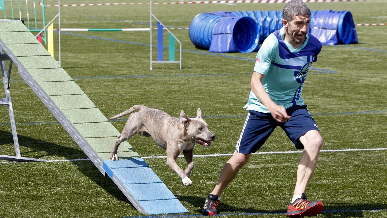 Los perros más ágiles se reunieron en O Milladoiro.