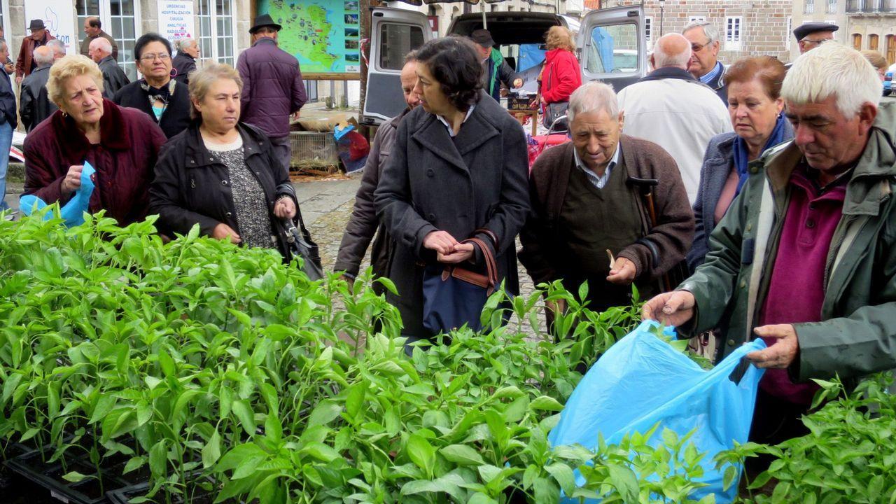 .Venta de plantas en la feria de Chantada