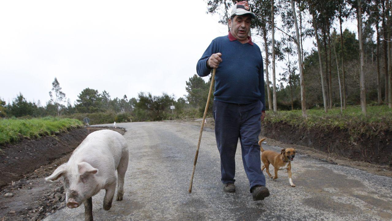 Se paseaba con su dueño por las calles y caminos de Dumbría y se comportaba como un perro: dócil, atento a las órdenes y juguetón con una compañera canina.