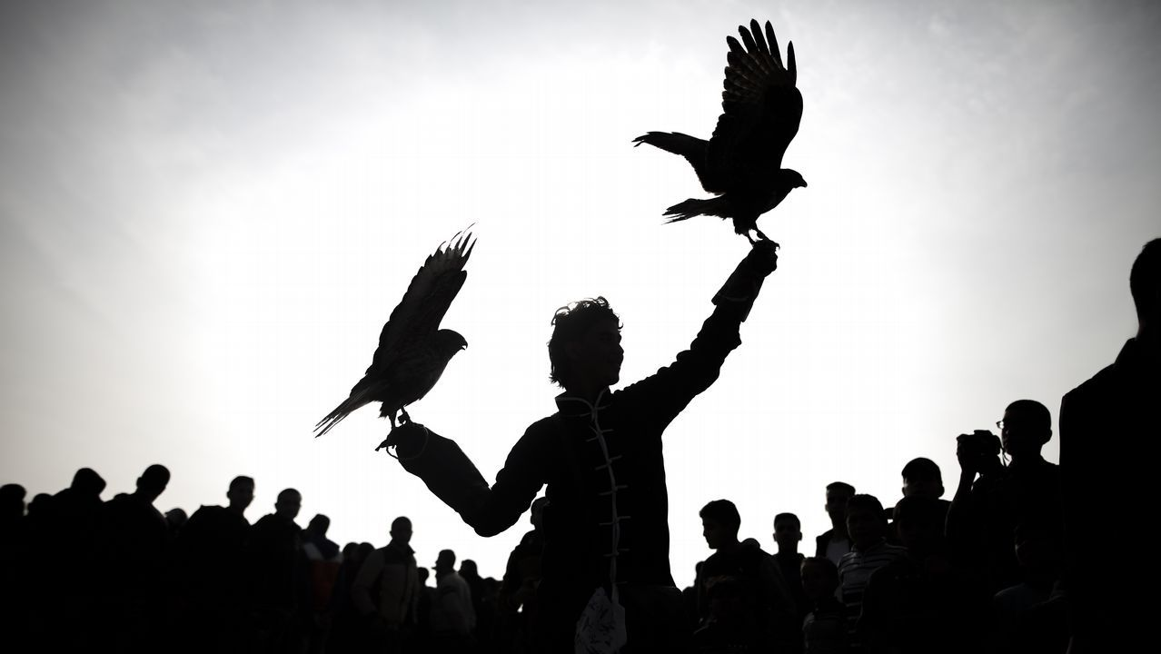 Un palestino con halcones