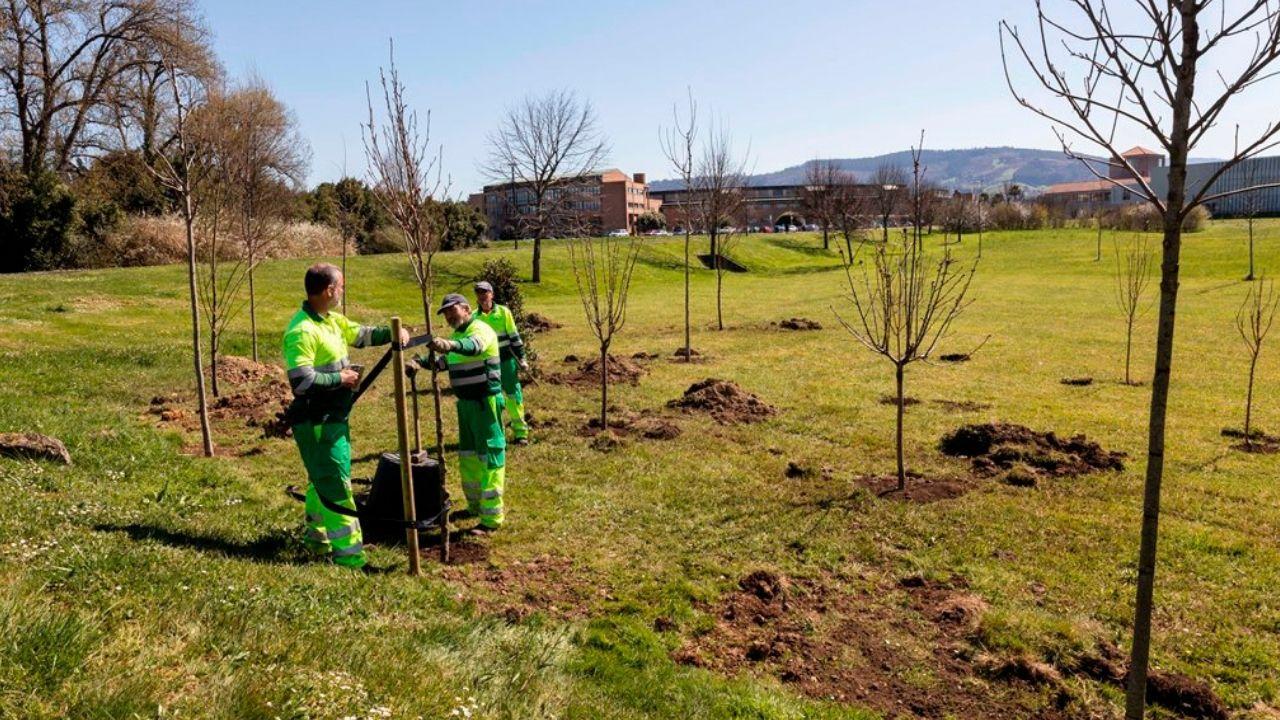 El macrobotellón universitario convierte en un estercolero el parque forestal de Beade.Plantación de árboles en el campus de Gijón