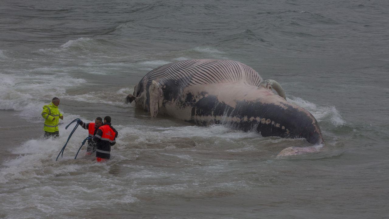 Aparece una ballena muerta en la playa de Balarés