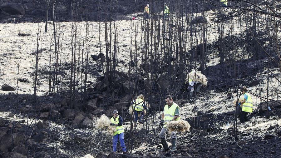 Galiza, incendios: La Xunta admite que en As Fragas do Eume han ardido 750 hectáreas.  - Página 4 VO22C2F2_21445
