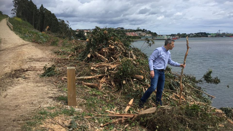 Concluyen los plazos para cortar los eucaliptos ilegales en Ribadeo